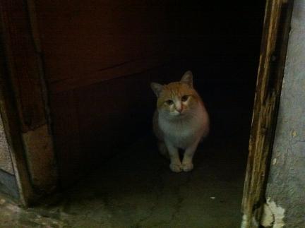 cat_066.jpg