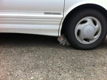 cat_068.jpg