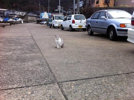 cat_069.jpg