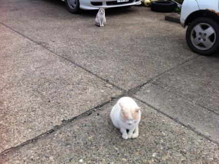 cat_070.jpg