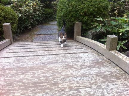 cat_071.jpg