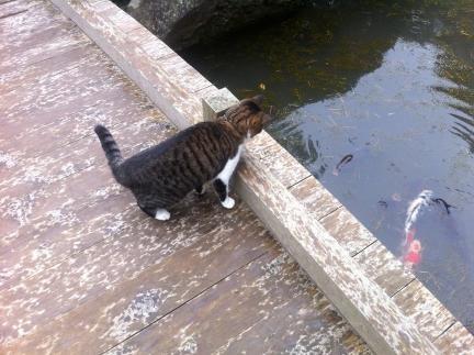 cat_072.jpg