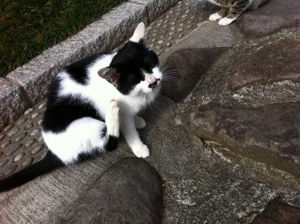 cat_074.jpg