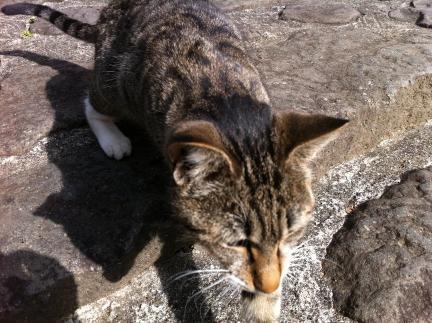 cat_075.jpg