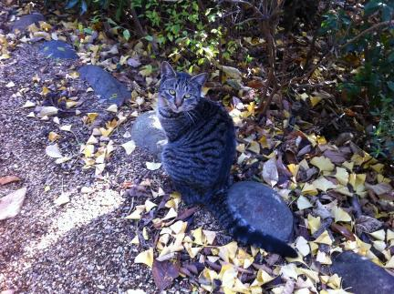 cat_076.jpg