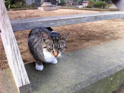 cat_081.jpg