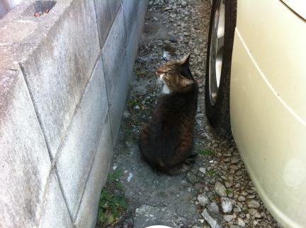 cat_085.jpg
