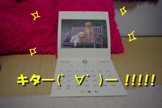 IMGP2694.jpg