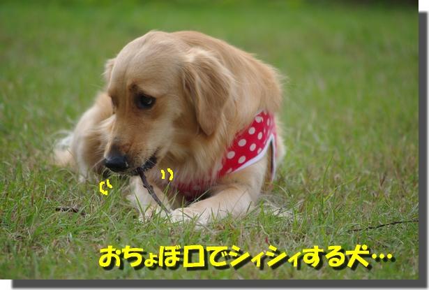 IMGP3780.jpg