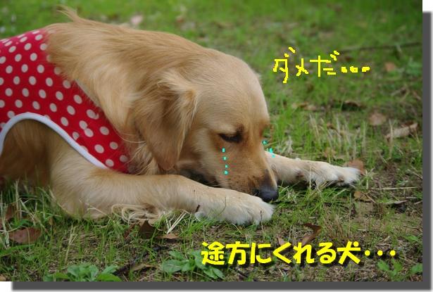IMGP3804.jpg