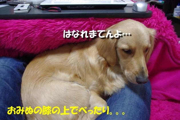 IMGP5033b.jpg