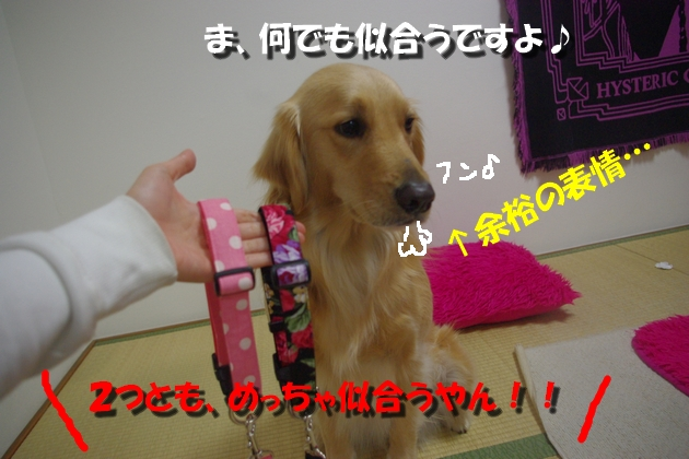 IMGP9400.jpg