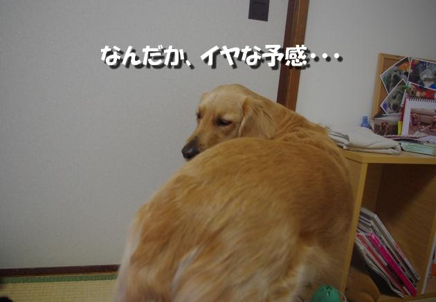 IMGP9805.jpg
