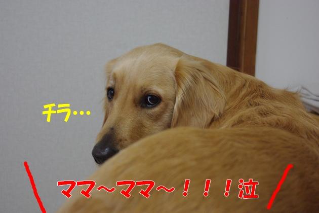 IMGP9807a.jpg