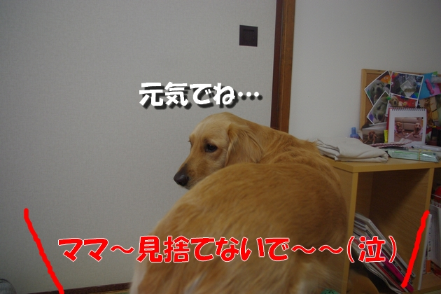 IMGP9808a.jpg