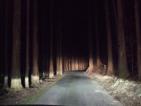15 暗闇の林