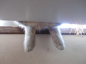昼寝中の脚