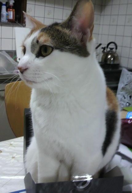 凛20120105