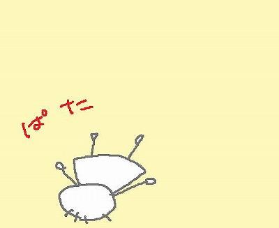 s-091001b-pata.jpg