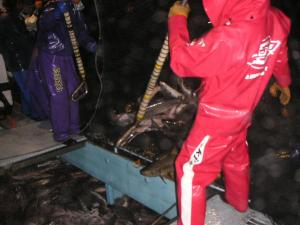 秋鮭漁 11