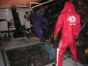 秋鮭漁 10