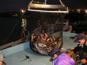 秋鮭漁 18