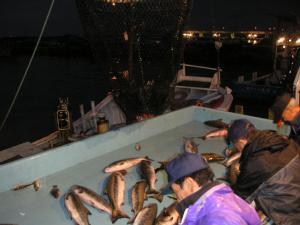 秋鮭漁 15