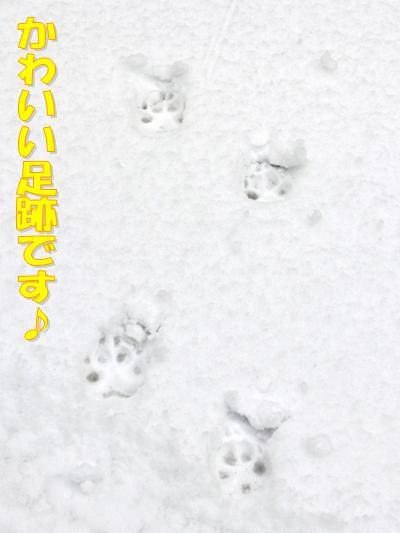 かわいい足跡