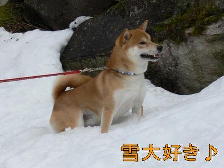 雪だ~~!