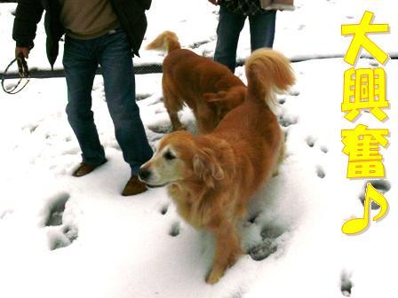 雪に大興奮
