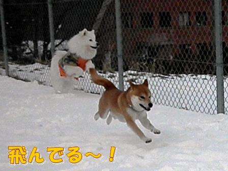 飛んでる~!