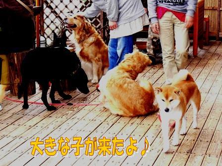 大型犬いっぱいだ~!