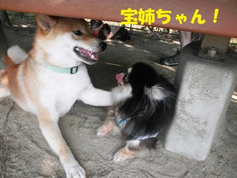 宝姉ちゃん~~!
