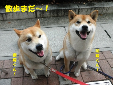 散歩まだ~!