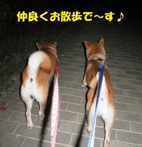 お散歩です!