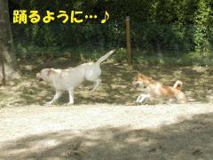 踊るように~!