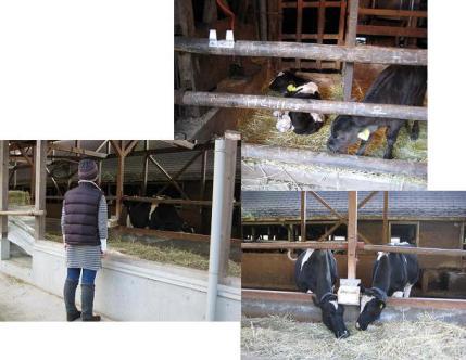 2009年11月23日弓削牧場の牛舎