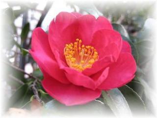 2010年1月4日ピンクの花