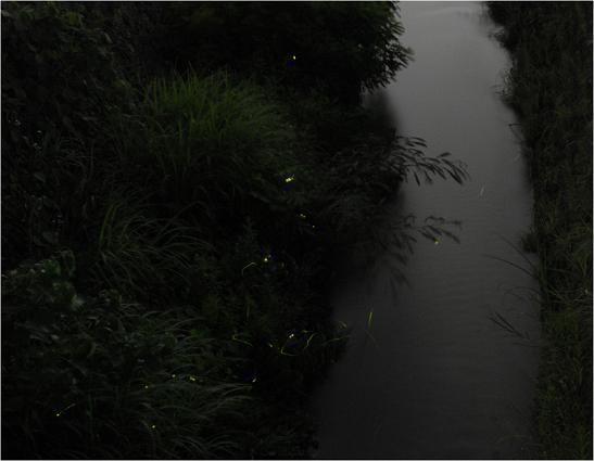 角間川花田橋で板谷さんが撮影しました。