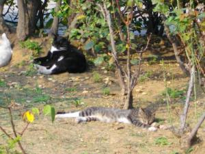 海事大学の猫4