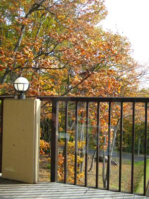 秋の色jpg