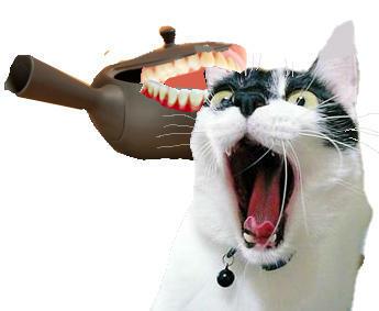 キュウス猫を噛む