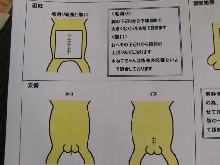 CIMG1872_convert_20120215104925.jpg