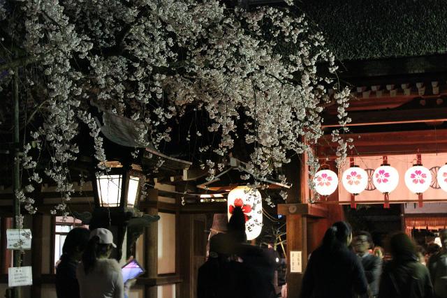 平野神社(京都)2
