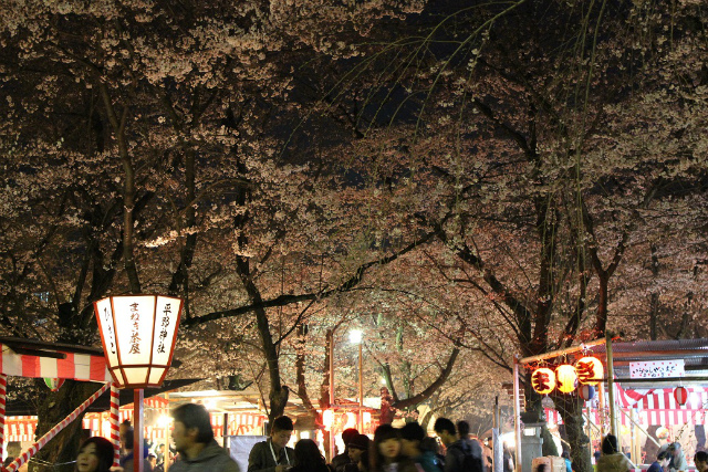 平野神社(京都)5