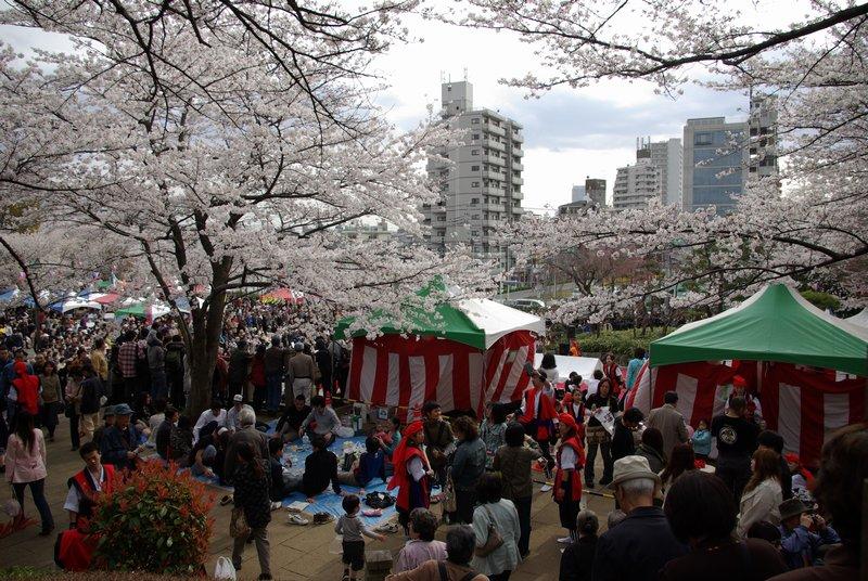 「飛鳥山 桜」の画像検索結果