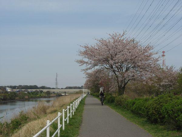 花見川千本桜緑地。奥の橋は京葉道路。