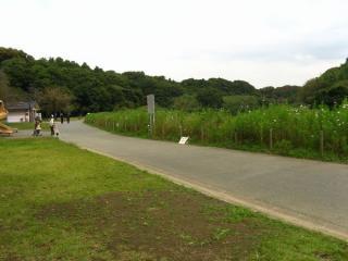 柏井橋の先にある花島公園。