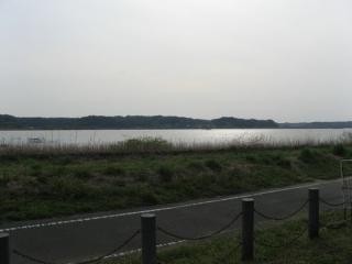 西印旛沼はここで終わり。