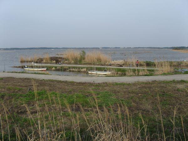 サイクリングロード上から見た北印旛沼。右奥に見える白い物体は成田スカイアクセスの高架橋。